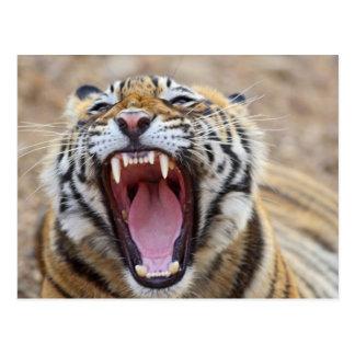 Königlicher bengalischer gähnender Tiger; Postkarte