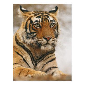 Königlicher bengalischer Tiger auf dem Felsen, Postkarte