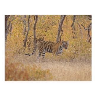 Königlicher bengalischer Tiger im Wald, Postkarte