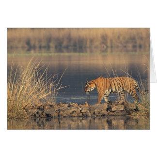 Königlicher bengalischer Tiger in Bewegung, Karte