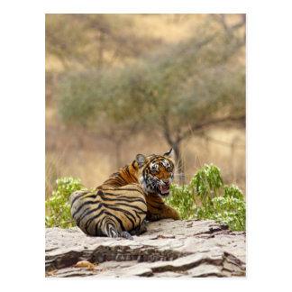 Königlicher bengalischer verwirrender Tiger, Postkarte