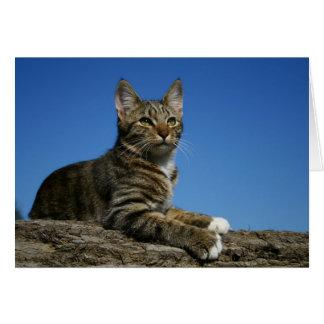 [Königliches Katzen-Porträt] [freier Raum nach Grußkarte