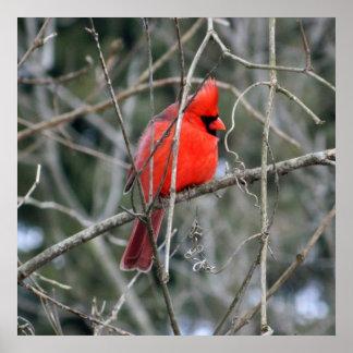 Königliches rotes Plakat des Kardinals-24x24