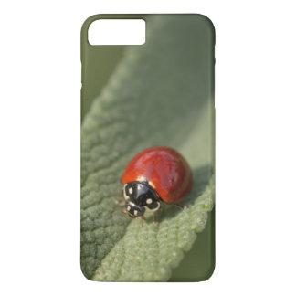 Konvergenter Marienkäferkäfer auf Cleveland-Salbei iPhone 8 Plus/7 Plus Hülle