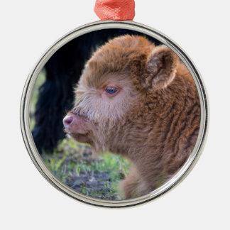Kopf des neugeborenen schottischen Hochländerkalbs Silbernes Ornament