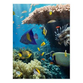 Koralle und Fische im Roten Meer, Ägypten Postkarte