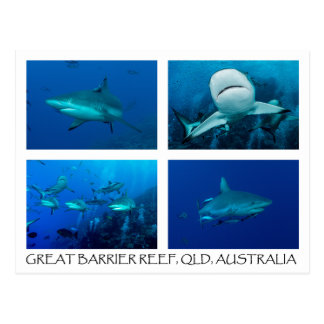 Korallenmeer-Postkarte - Riff-Haifische Postkarte