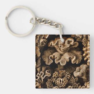 Korallenrotes Hexacoralla im Braun Schlüsselanhänger