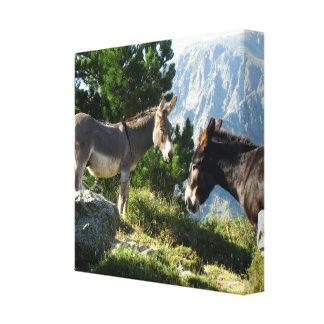 Korsika Esel Gespannte Galerie Drucke