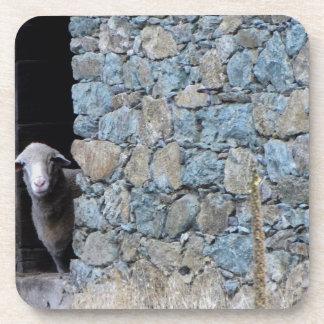 Korsika Schaf Drink Untersetzer