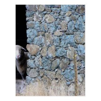 Korsika Schaf Postkarte