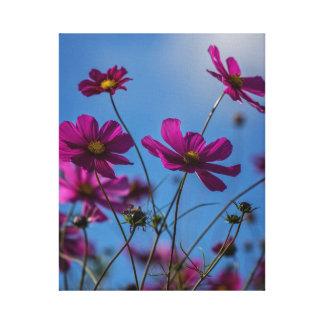 Kosmos-Blumen Leinwanddruck