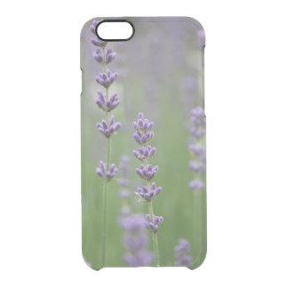 Köstlicher Lavendel Durchsichtige iPhone 6/6S Hülle