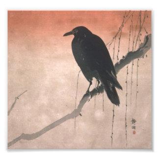 Krähe auf einer Weide-Niederlassung Kunstphotos