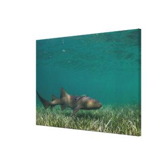 Krankenschwester-Haifisch-Schwimmen Leinwanddruck