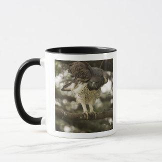 KriegsEagle-Erwachsener im Baum Tasse