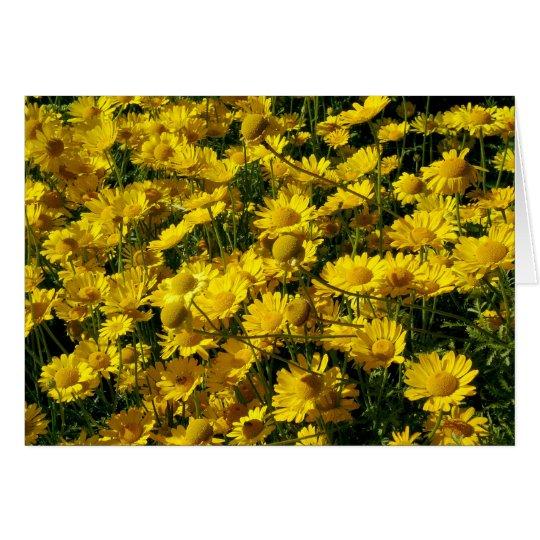 Kronen-Gänseblümchen/Chrysantheme Coronarium Grußkarte