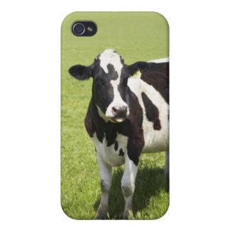 Kuh in der Wiese iPhone 4 Case