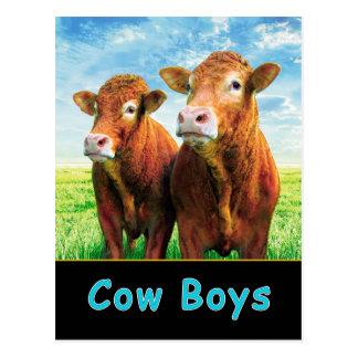 Kuh-Jungen Postkarten