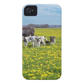 Kuh mit den Kälbern, die in der Wiese mit iPhone 4 Hüllen