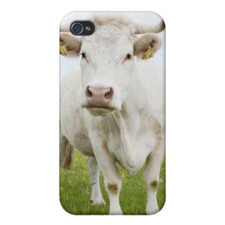 Kuh stehend auf dem grasartigen Gebiet iPhone 4 Case