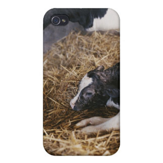 Kuh und Kalb im Heu iPhone 4 Etui