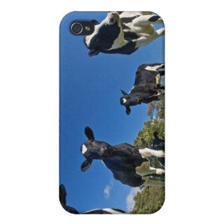 Kühe, die auf Weide füttern iPhone 4/4S Cover