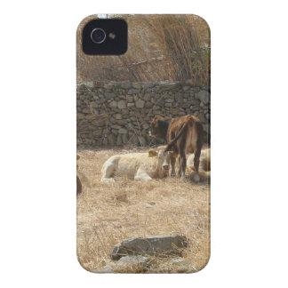 Kühe iPhone 4 Case-Mate Hülle