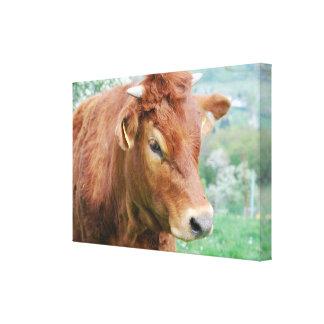 Kühe Kälber Rinder - Photo: Jean-Louis Glineur Leinwanddruck