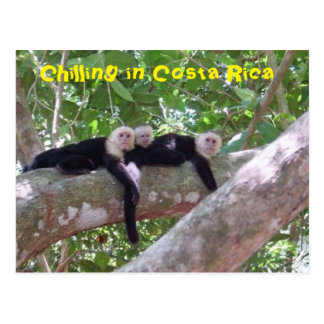Kühlen in Costa Rica Postkarte