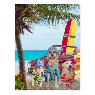 Kundengerechte lustige Hunde/Labradore auf dem Postkarte