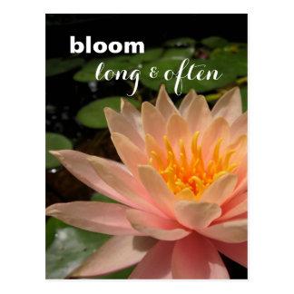 Kundenspezifische Wasser-Lilien-Postkarte Postkarte