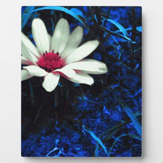 Kunst-Blume Fotoplatte