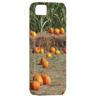 Kürbis-, Mais-und Heu-Herbst-Ernte-Fotografie iPhone 5 Hülle