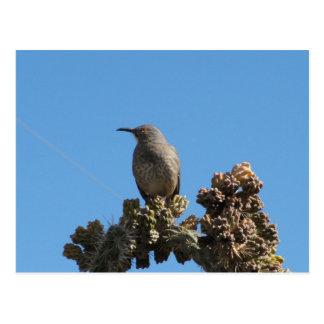 Kurven-berechneter Thrasher Vogel Postkarte