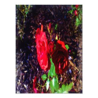 La fleur de rose rouge photographie d'art