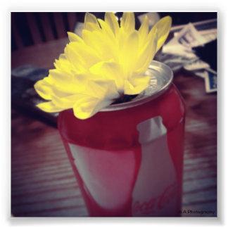 La fleur peut dedans photographes