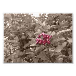 La sépia de fleur éditent la copie photos d'art