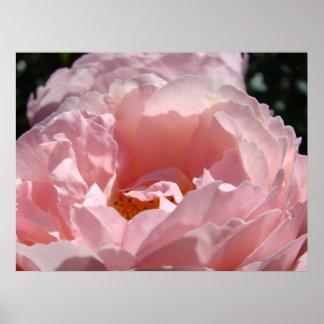 La toile d'impression d'art de ROSE de ROSE ou