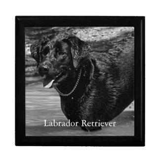 Labrador retriever im Wasser Schmuckschachtel