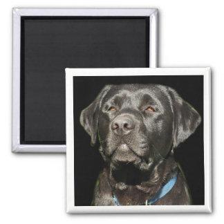 Labrador retriever-Magnet Quadratischer Magnet