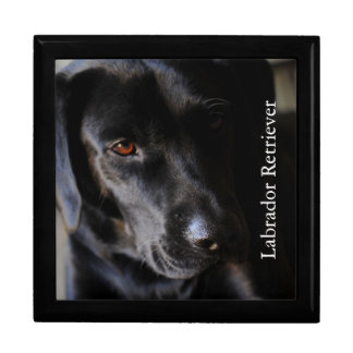 Labrador retriever schmuckschachtel