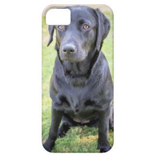 Labradorkasten Schutzhülle Fürs iPhone 5