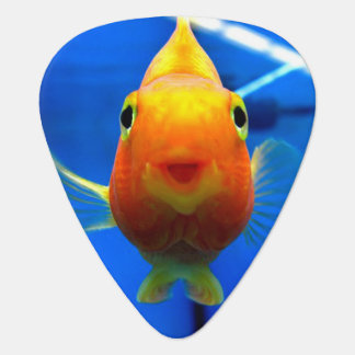 Lächelndes Goldfish-Plektrum Plektrum
