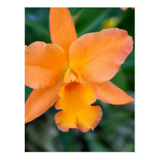 Lachsorchidee Postkarte