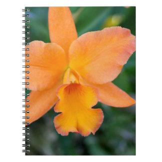 Lachsorchidee Spiral Notizblock