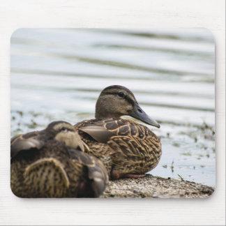 Lakeshore Enten Mousepads