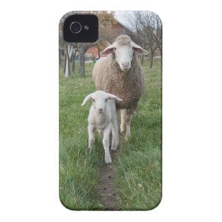 Lamm und Schafe iPhone 4 Hülle