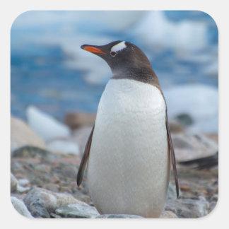 L'Antarctique. Port de Neko. Pingouin de Gentoo Sticker Carré