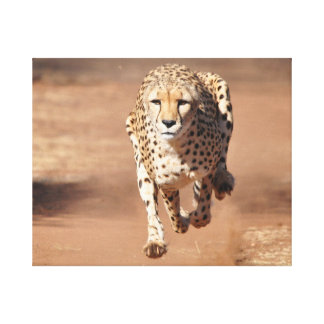 laufender Gepard Leinwanddruck